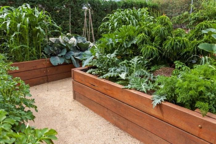 Tips for Creating a Backyard Vegetable Garden   Angie's Li