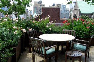 Best Terrace/Roof Garden Plants You should Gr