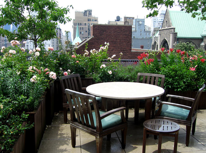 Best Terrace/Roof Garden Plants You should Gr