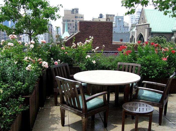 Best Terrace/Roof Garden Plants You should Grow - lenny - Garden .