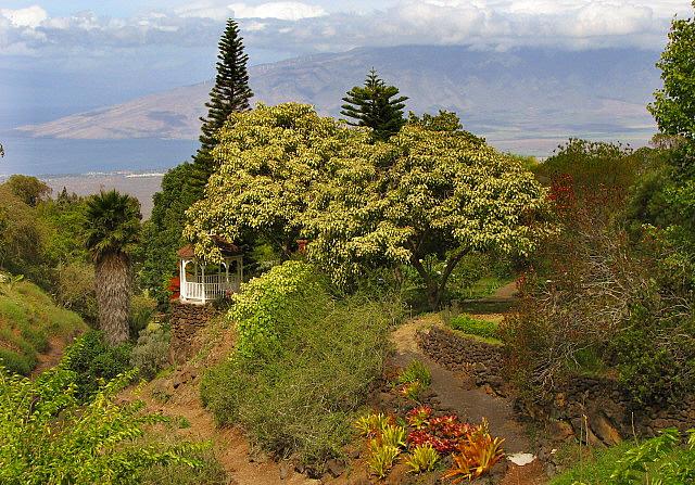 Kula Botanical Garden, Maui, Hawa