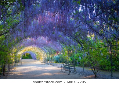 Botanical Garden Images, Stock Photos & Vectors | Shuttersto