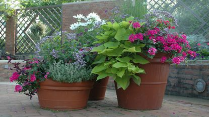 Expert advice to ace container gardening this summer - Chicago Tribu