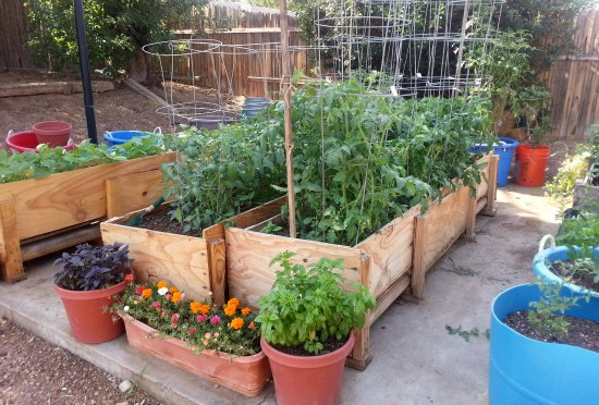 Gardening in Small Spaces - Container Gardening - One Hundred .
