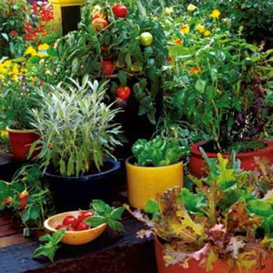 Grow Your Own Container Gardens - Organic Gardening - MOTHER EARTH .