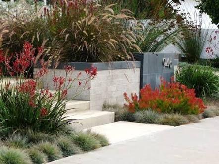 contemporary australian garden design - Google Search | Native .