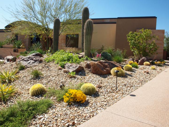 Desert Landscape - Schilling Horticultu