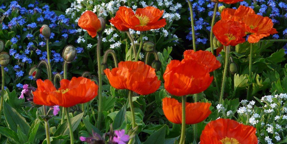How to Start a Flower Garden: 3 Steps for Beginners | Garden Desi