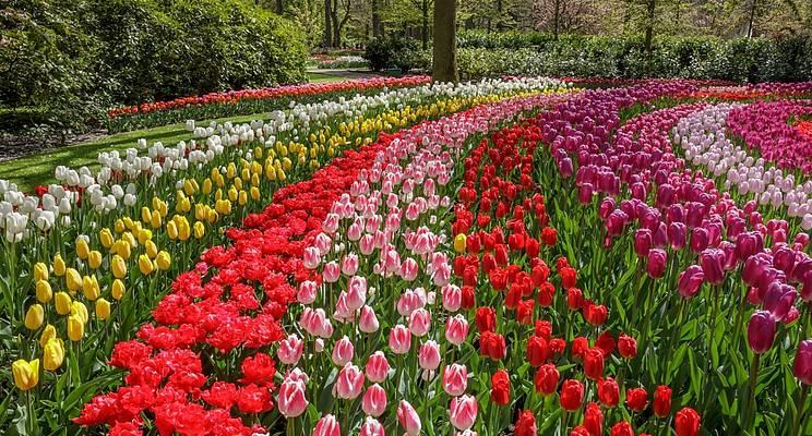 7 million blooms in Holland's largest flower gard
