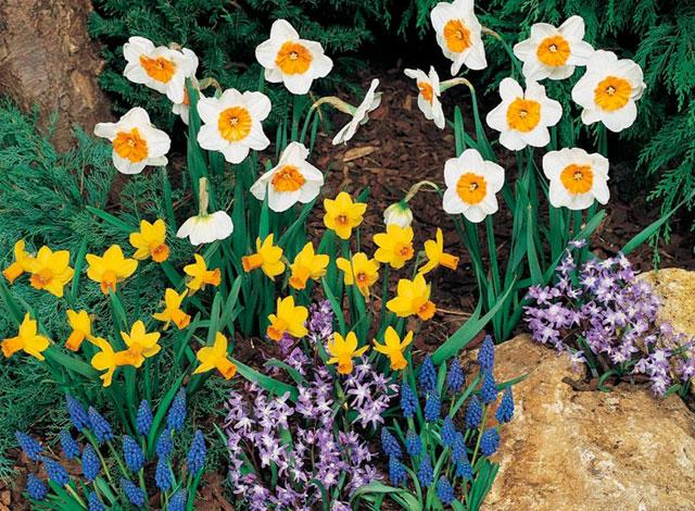 The Rarely-Tended Flower Gard