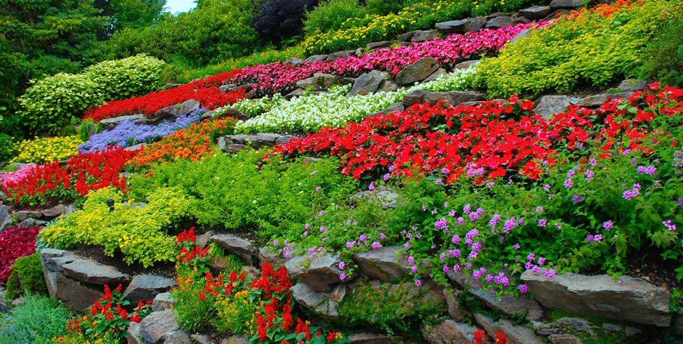 How to Start a Flower Garden: 3 Steps for Beginners   Garden Desi
