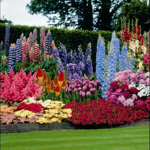Tips to Arrange a Flower Garden And How to Do It   Perennial .