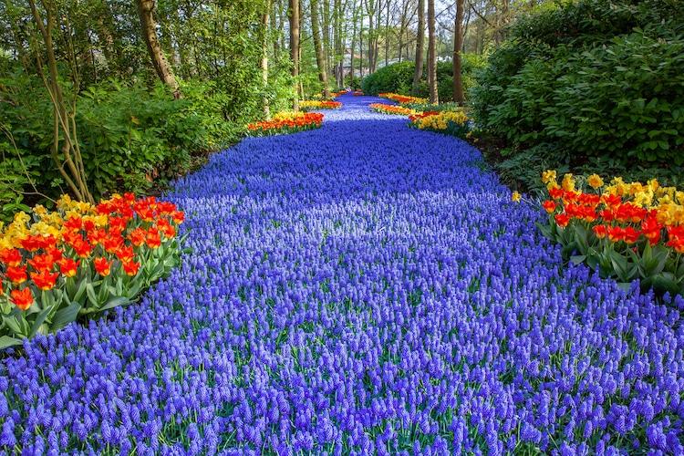 Enjoy Over 7 Million Blooms in Holland's Largest Flower Gard