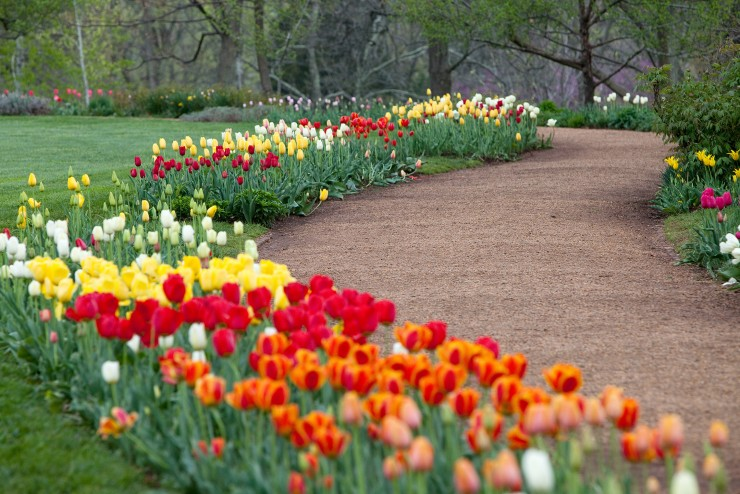 Flower Gardens Today   Thomas Jefferson's Monticel
