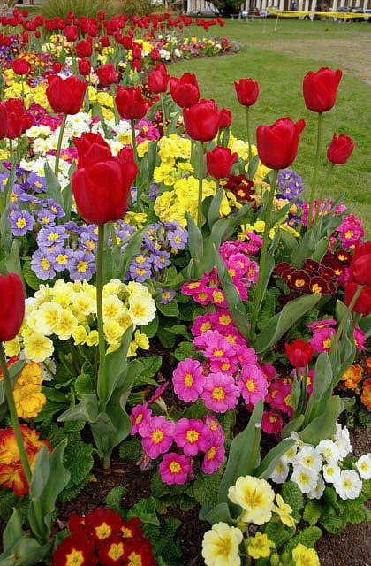 6 Tips for a Better Spring Flower Garden   Flower garden design .
