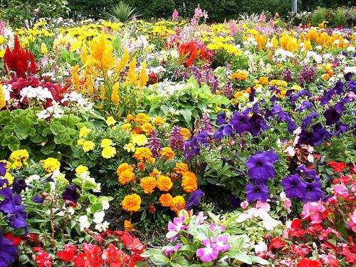 Learn tips and trends for flower gardening Feb. 11   Vanderbilt .