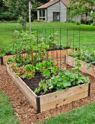 "Amazon.com: Cedar Raised Garden Bed 4' x 6' x 15"": Arts, Crafts ."