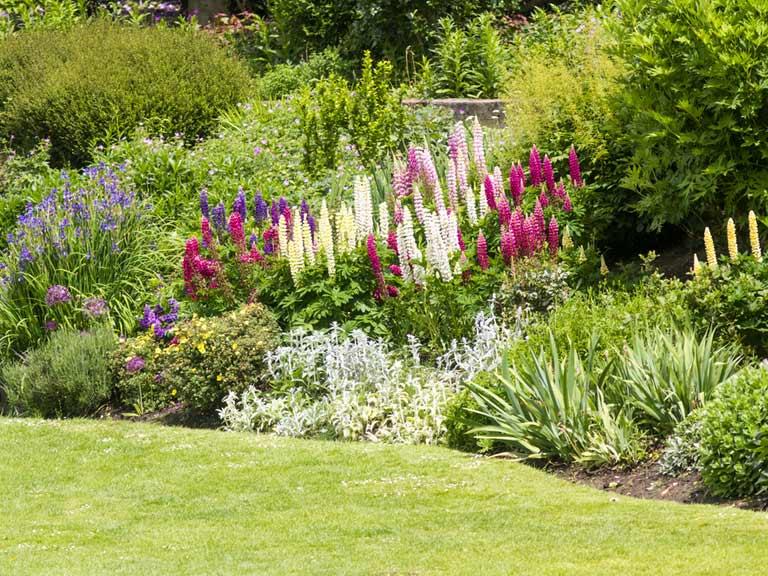 Top tips and ideas for a better garden border - Sa