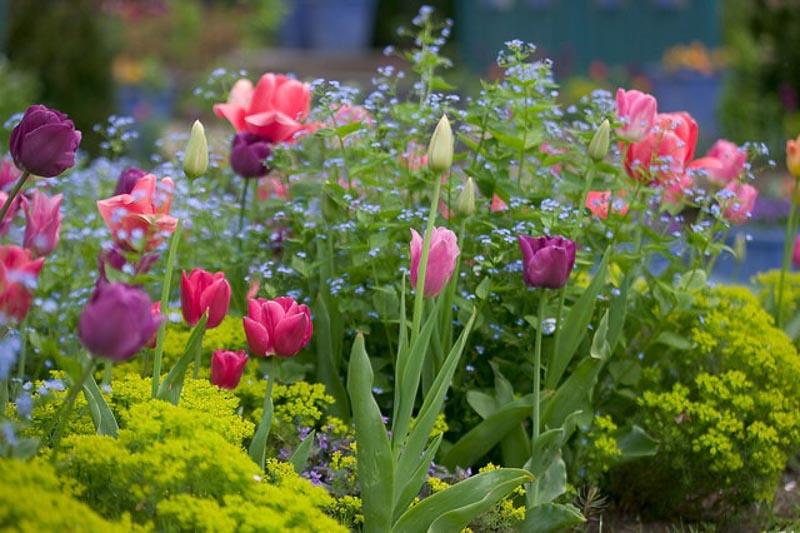Beds & Borders - Inspiring Garden Ideas for all gardene