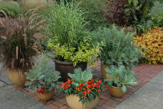 Gardening: Plant a few edible and decorative containers for fall .