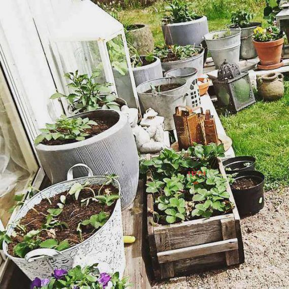 How to Start a Container Vegetable Garden: Basic Tips⎢U