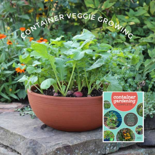 How to Grow Vegetables in Containers (Start Here) | Empress of Di