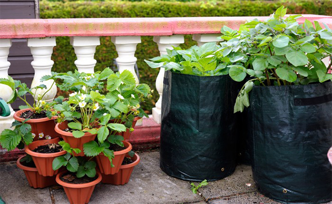 Container Gardening 101: Organic Gardening for the Apartment Dwell