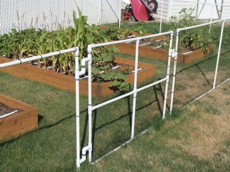 Inexpensive DIY Garden Fence Ideas - MORFLO