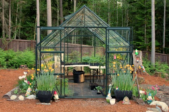 How to Grow a Greenhouse Vegetable Garden - One Hundred Dollars a .