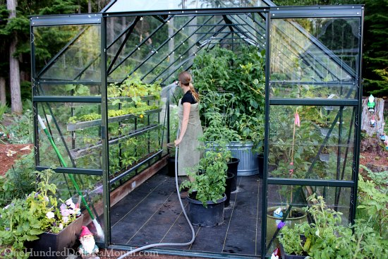 Greenhouse Vegetable Gardening - One Hundred Dollars a Mon