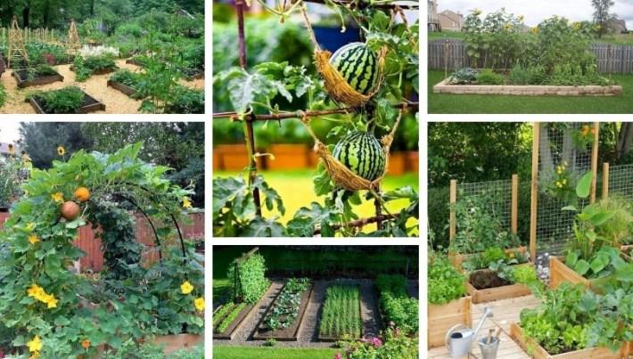 45 Affordable DIY Design Ideas for a Vegetable Garden   My desired .