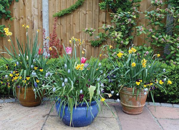 Nine small garden design ideas on a budget   The Clare County Revi