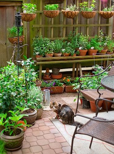 Urban garden inspiration - Candace Kram