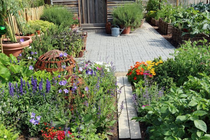 Edible Landscaping: Choosing Edible Plants for Your Garden | The .