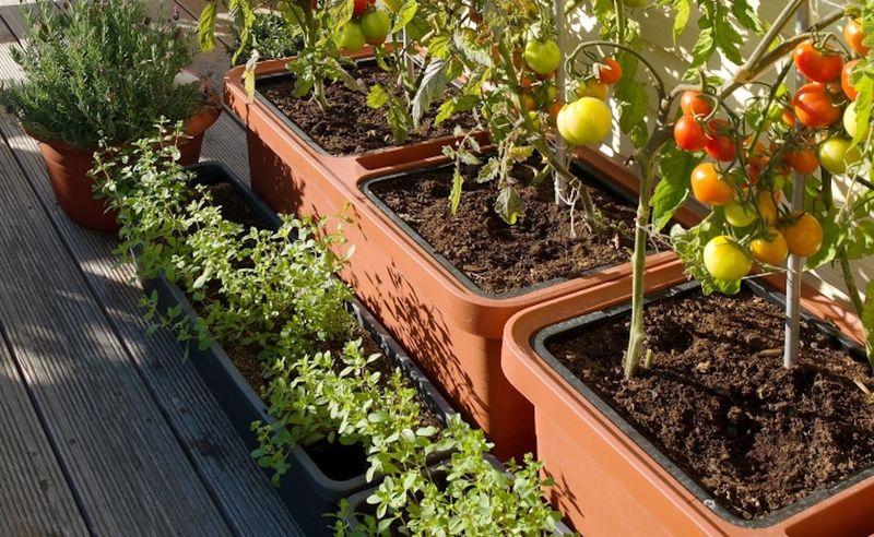 Self-Care Garden Planters : Berberis self-watering plant