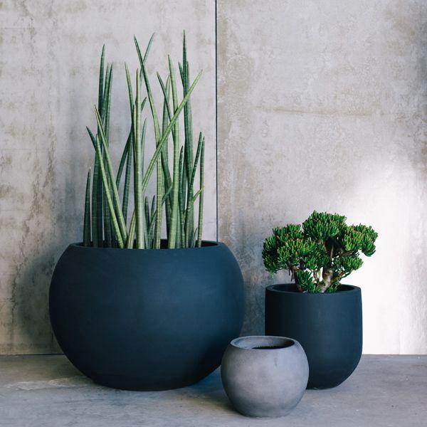 Designer Pots by The Balcony Garden | Garden Pots | Pot Plants .