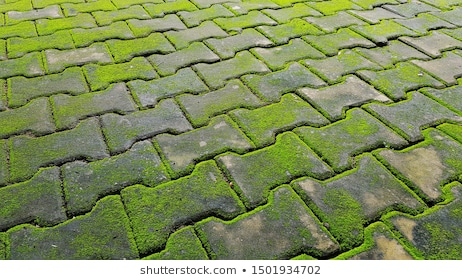Garden Tiles Images, Stock Photos & Vectors | Shuttersto