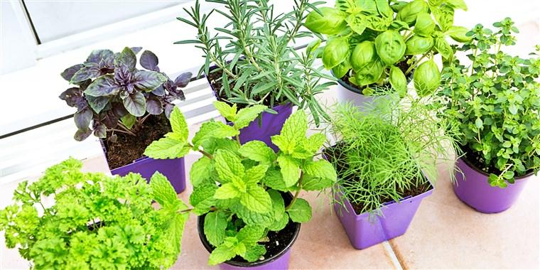 How to grow an indoor herb gard