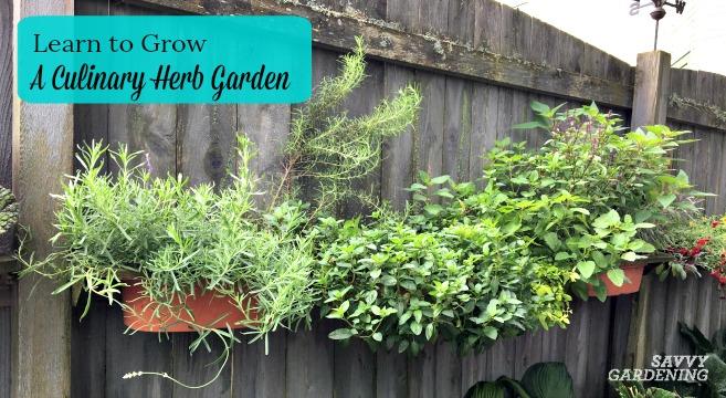Growing a Culinary Herb Garden offers Fresh Homegrown Flav