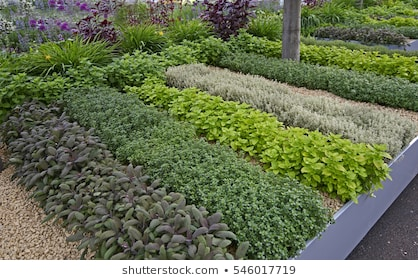 Garden Herb Images, Stock Photos & Vectors | Shuttersto