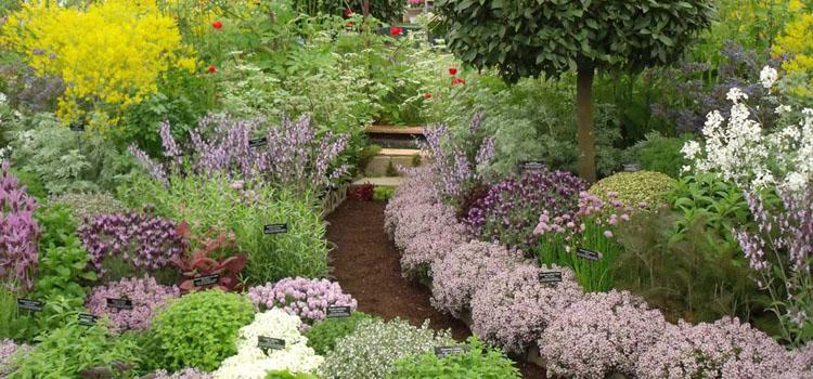 Planning a New Herb Garden - Part