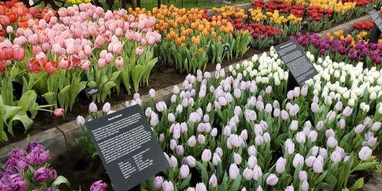 Cornell Cooperative Extension | Home Gardeni