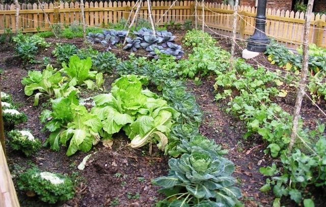 5 Home Gardening Tips & Ideas – www.hewlynn.c