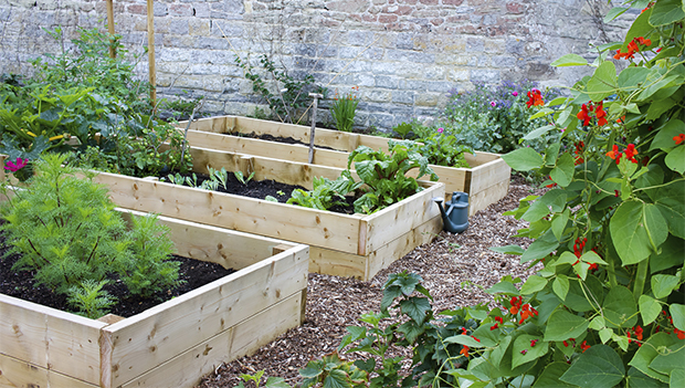 How to Start a Sustainable Home Garden | ACTI