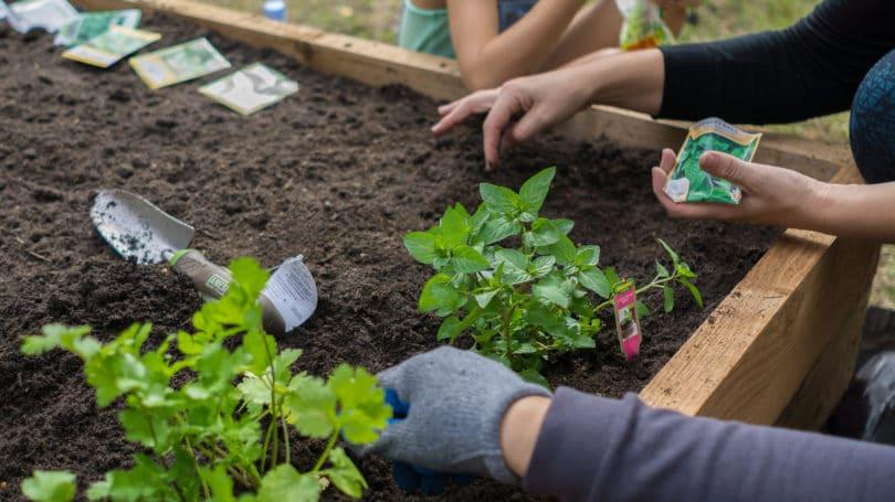 How to Start a Home Vegetable Garden - Benefits & Saving Mon