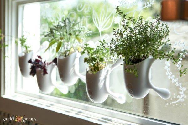 My Indoor Herb Growing Schedule Throughout the Year | Herb garden .