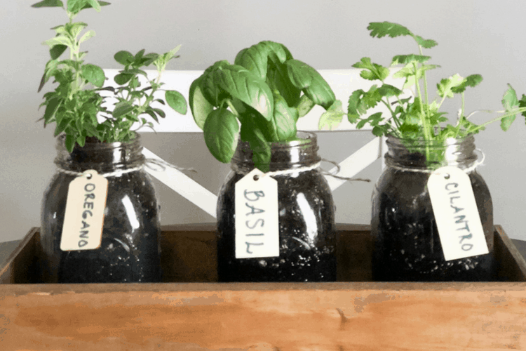 DIY Indoor Herb Garden - How To Make Your O
