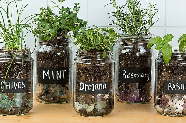 Make An Adorable Herb Garden With Old Glass Jars | Mason jar herb .