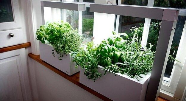 4 Fun & Creative Tips for Growing An Indoor Herb Garden .