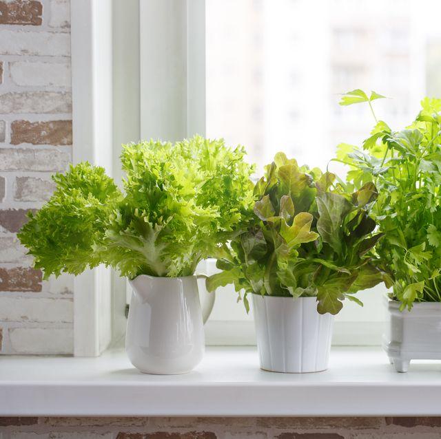 15 Indoor Herb Garden Ideas 2020 - Kitchen Herb Planters We Lo